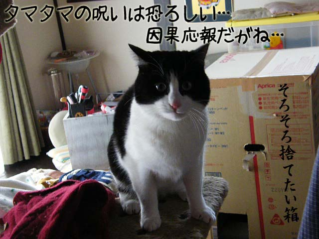 DSCF1369のコピー.jpg