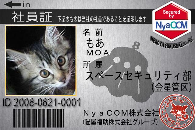 モア2.jpg