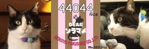 44044nice.jpg