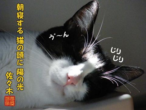 DSCF3359.jpg