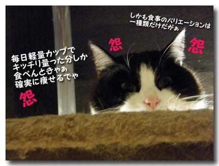 DSCF4657.jpg
