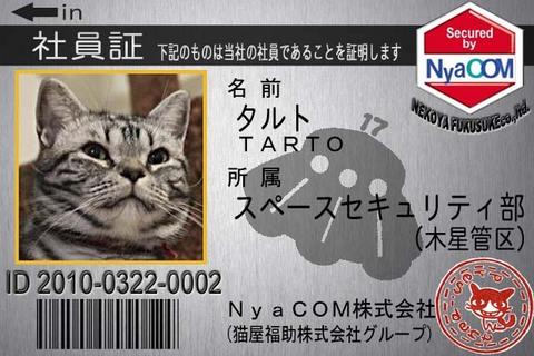 たると_nyacom.jpg