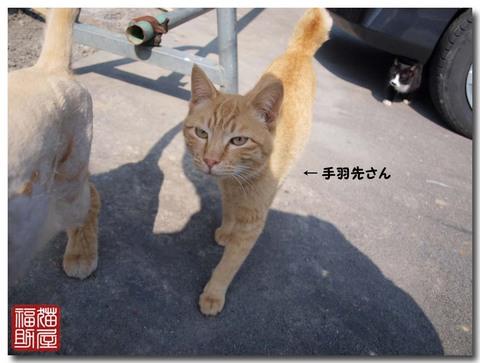 猫寺2.jpg