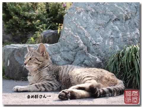 猫寺5.jpg