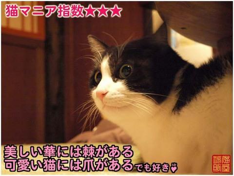 P3270680.jpg
